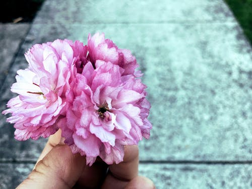 Безкоштовне стокове фото на тему «великий план, вродлива, квітка, колір»