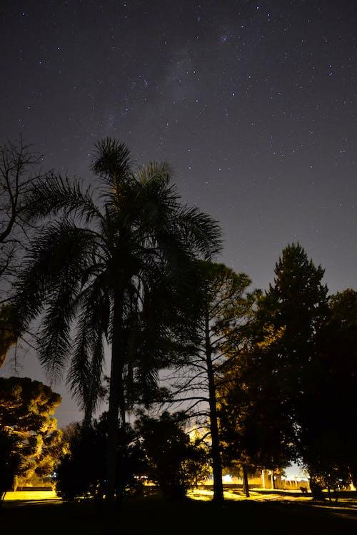 Gratis lagerfoto af nat