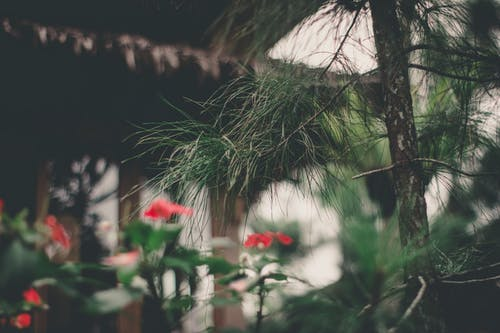 Ilmainen kuvapankkikuva tunnisteilla aamu, ikivihreä, kasvikunta, kasvu