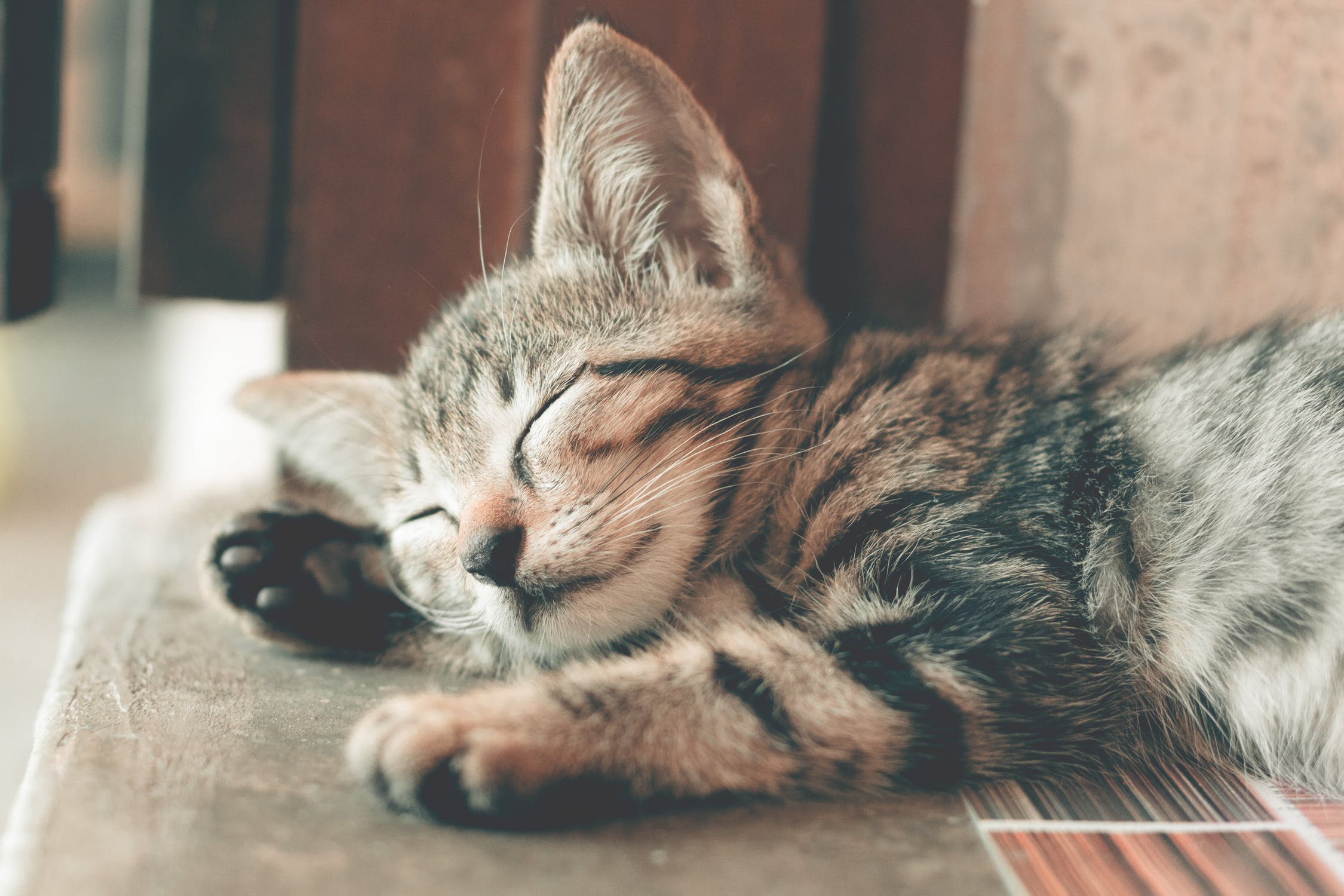 Common Examples of Cat Personalities