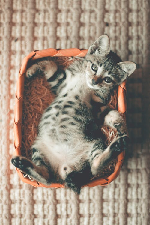 Photo of  Tabby Kitten Lying on Orange Basket