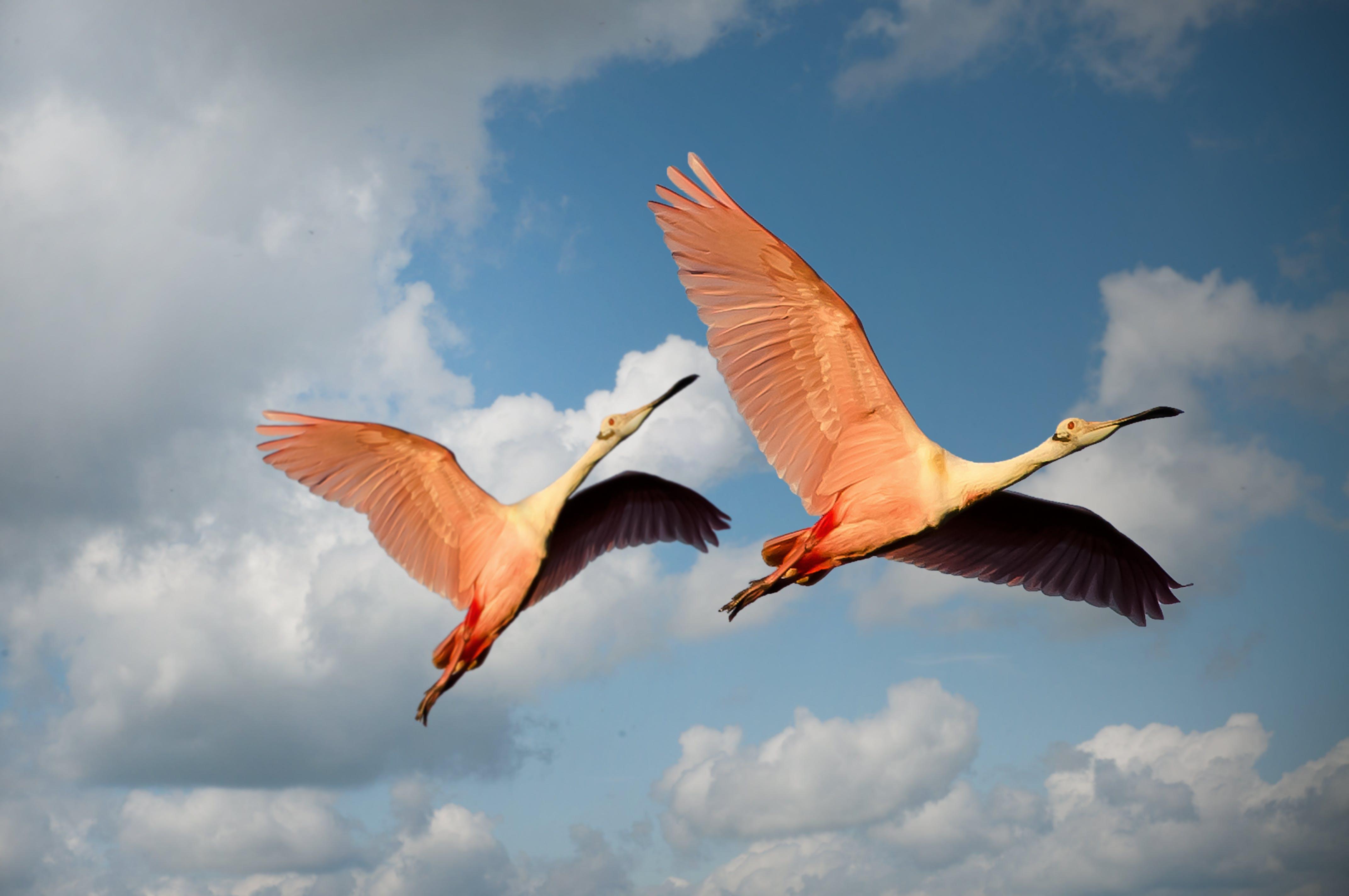 animals, avian, beaks