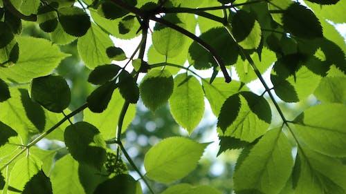 Photo of Green Leaf Tree