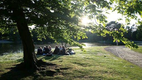eavening, 人, 夏天, 年輕 的 免費圖庫相片