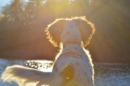 Free stock photo of sun, trees, dog, lens flare