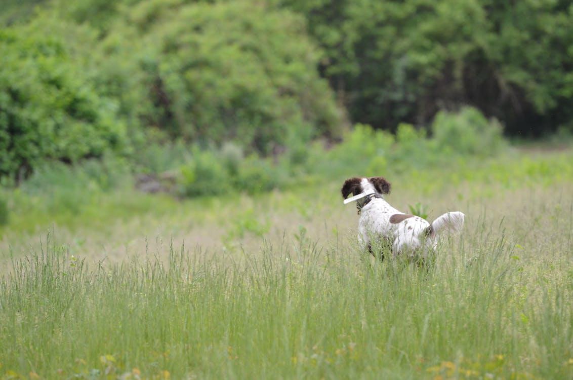 개, 개가 달리다, 개의의 무료 스톡 사진