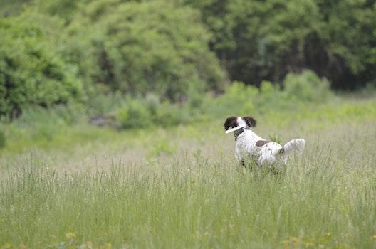 Free stock photo of field, trees, dog, running