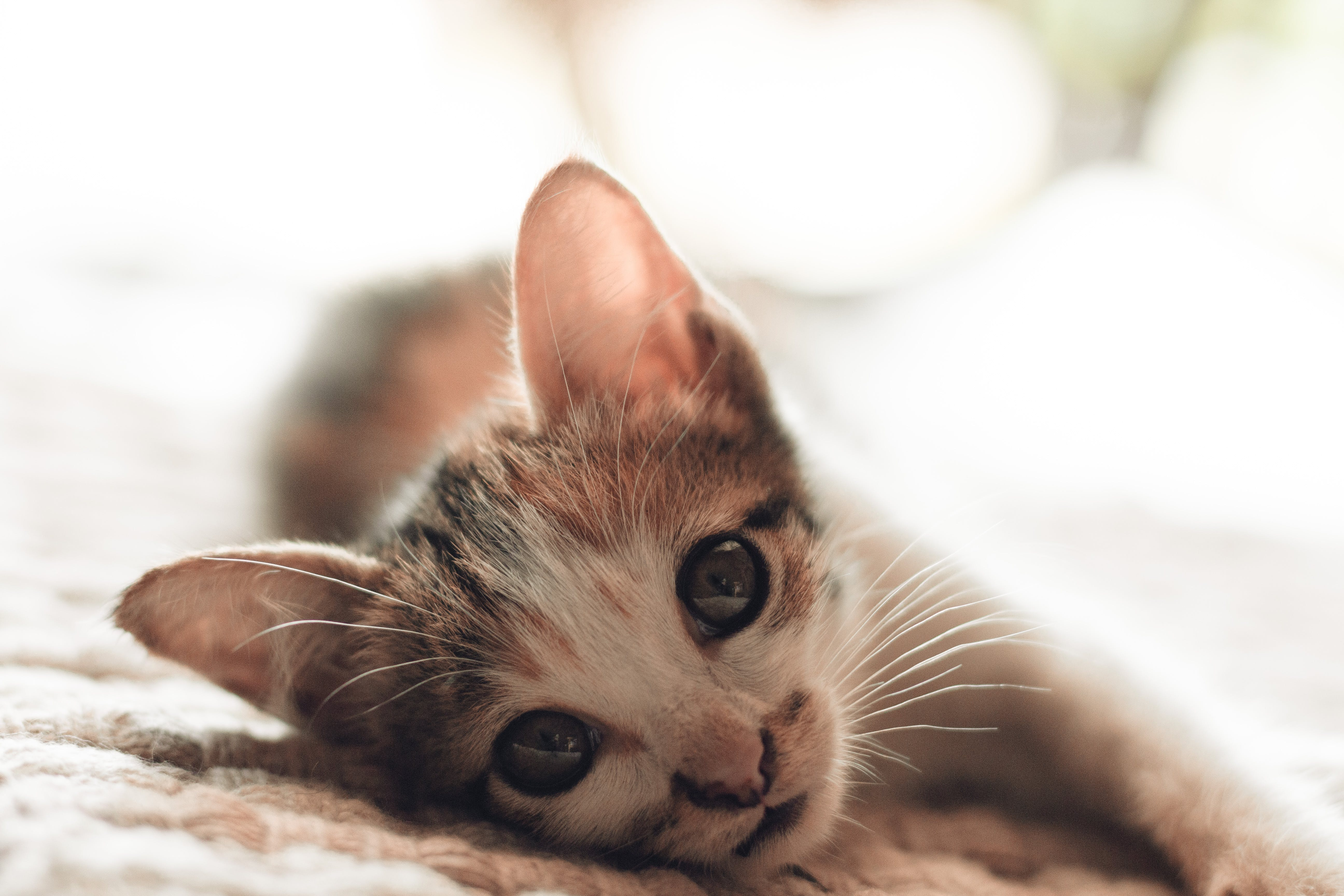 Close-Up Photography of Kitten