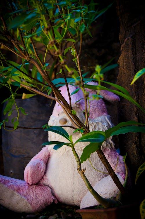 Fotos de stock gratuitas de detrás, oculto, plantas