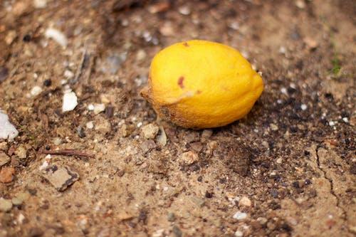 Free stock photo of fotografiando, limon, lorenzoesteban