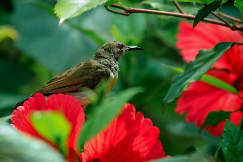 Ảnh lưu trữ miễn phí về cận cảnh, cánh hoa, chim mặt trời, chim mặt trời tím