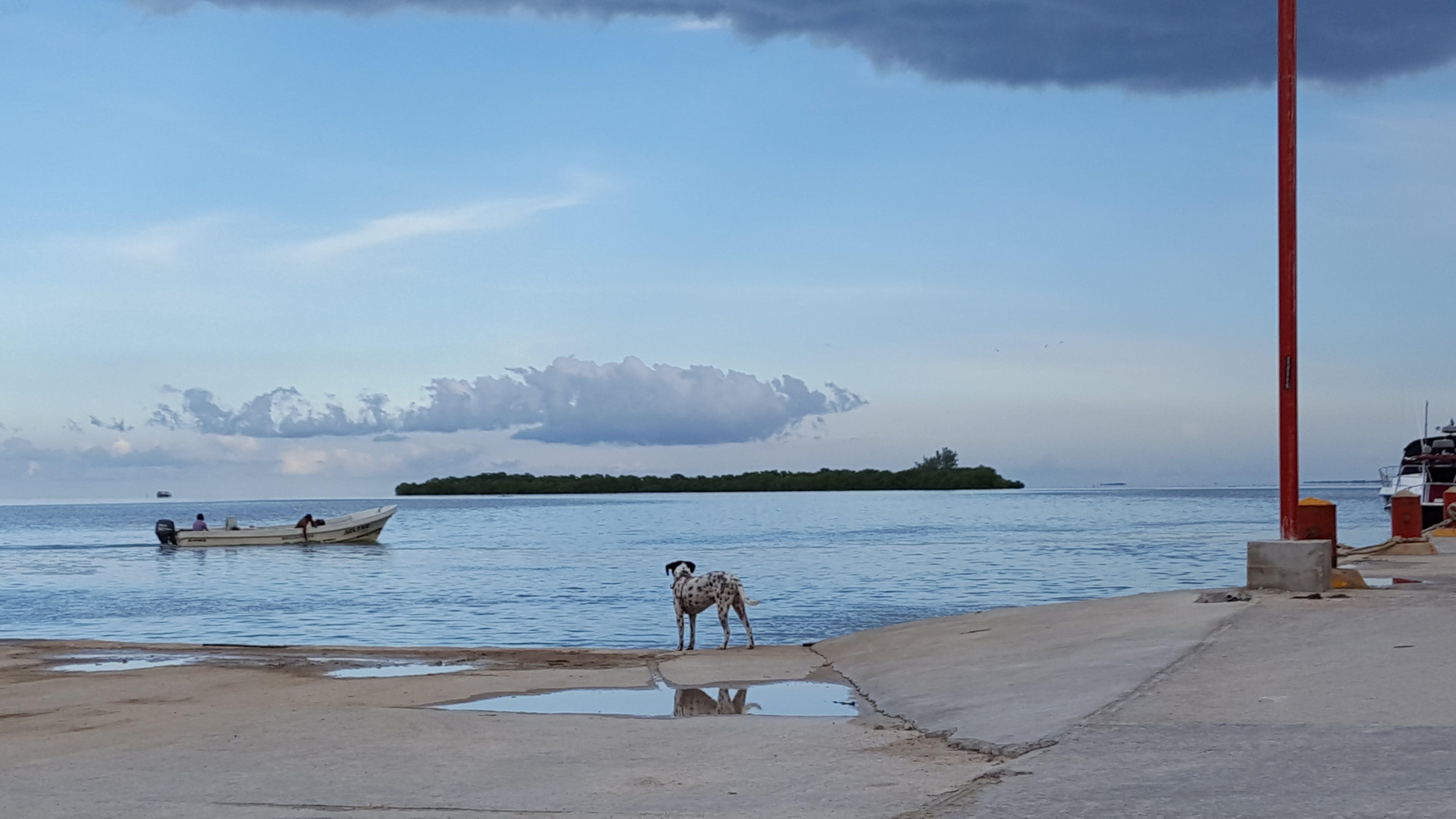 Gratis lagerfoto af hav, hund, vaction