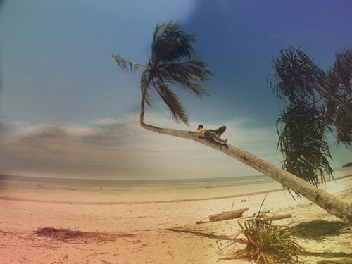 Free stock photo of black man, coconut tree, ocean, rest