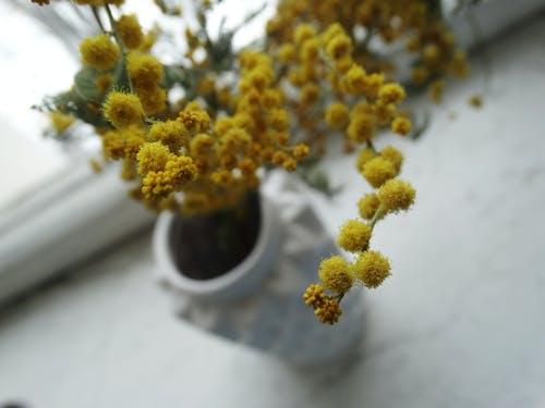 Kostnadsfri bild av blomma, blommor, färg, flora