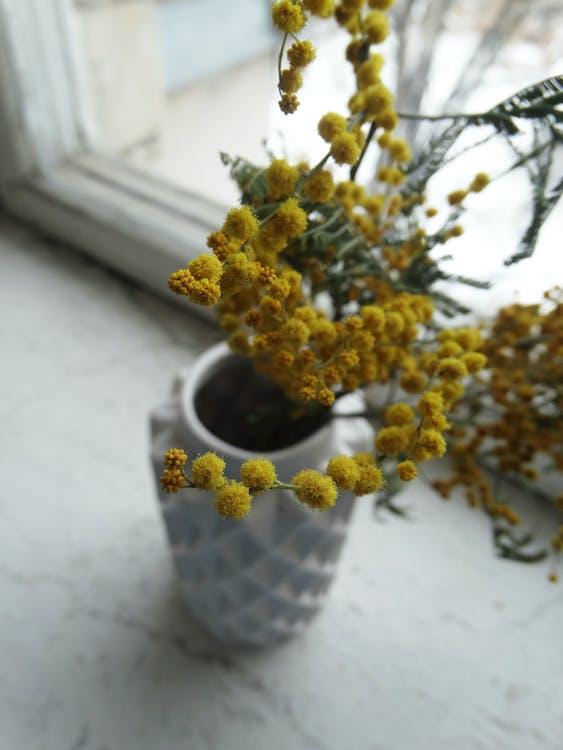 bitki örtüsü, büyüme, Çiçekler