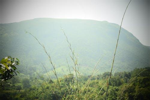 Бесплатное стоковое фото с araku, vizag, туман