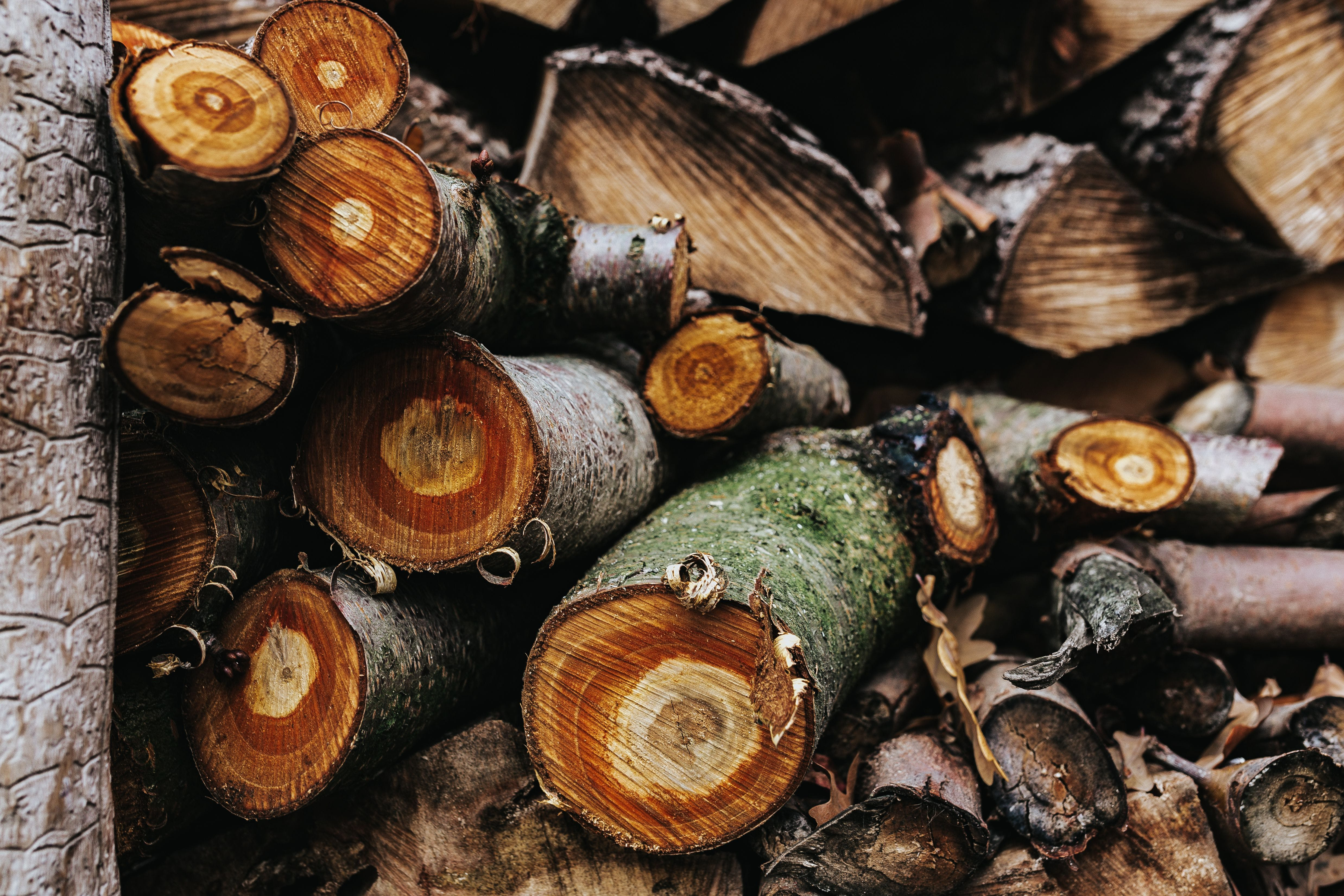 Sliced Logs Stacked Around Each Other
