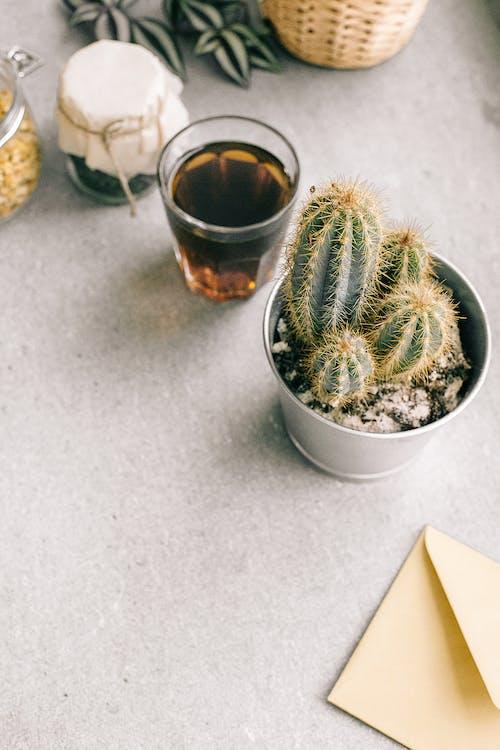 Imagine de stoc gratuită din arid, băutură, cactus, cafea