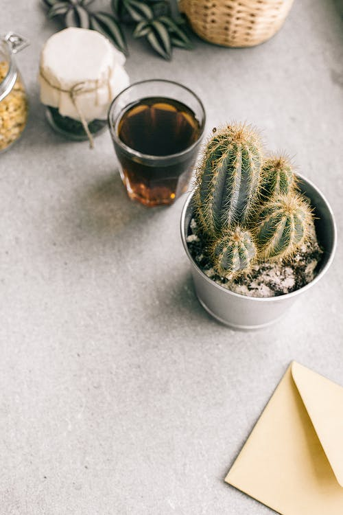 Photo of Green Cactus Plant Beside Clear Drinking Glass