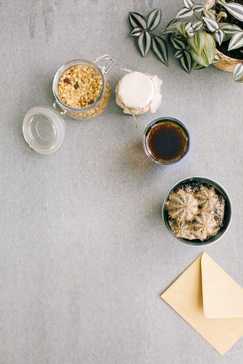 Základová fotografie zdarma na téma design, granola, kaktus, karta