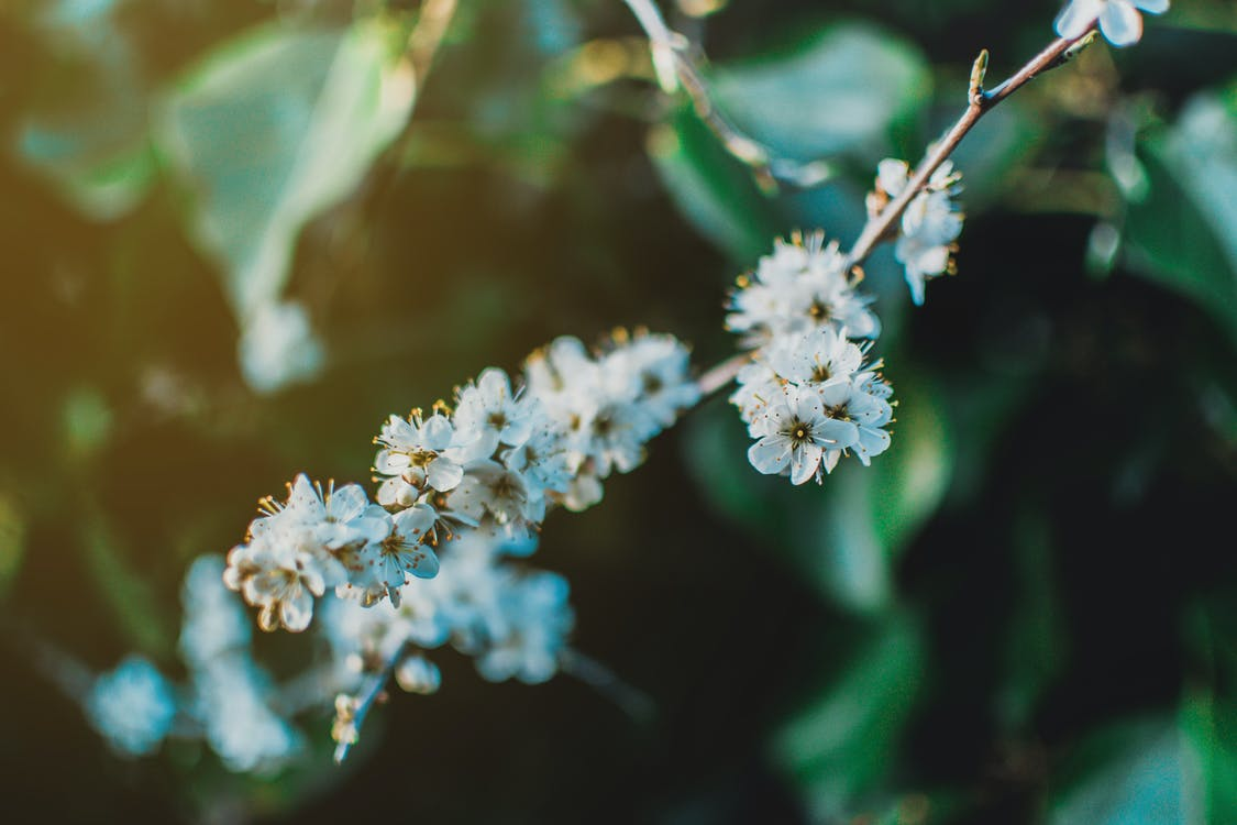 Shallow Focus Photo of White Petaled Flowers