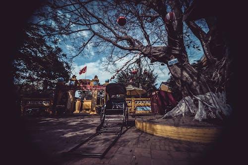 คลังภาพถ่ายฟรี ของ ตอนเย็น, ตึก, ต้นไม้, ถนน