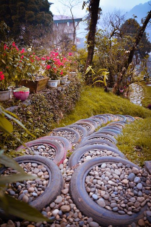 คลังภาพถ่ายฟรี ของ กลางวัน, การเจริญเติบโต, ดอกไม้, ต้นไม้