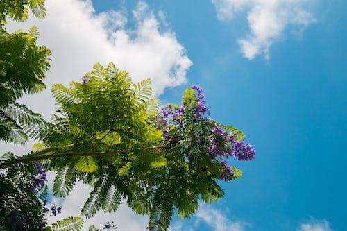 Foto d'estoc gratuïta de arbre, assolellat, bonic, branca