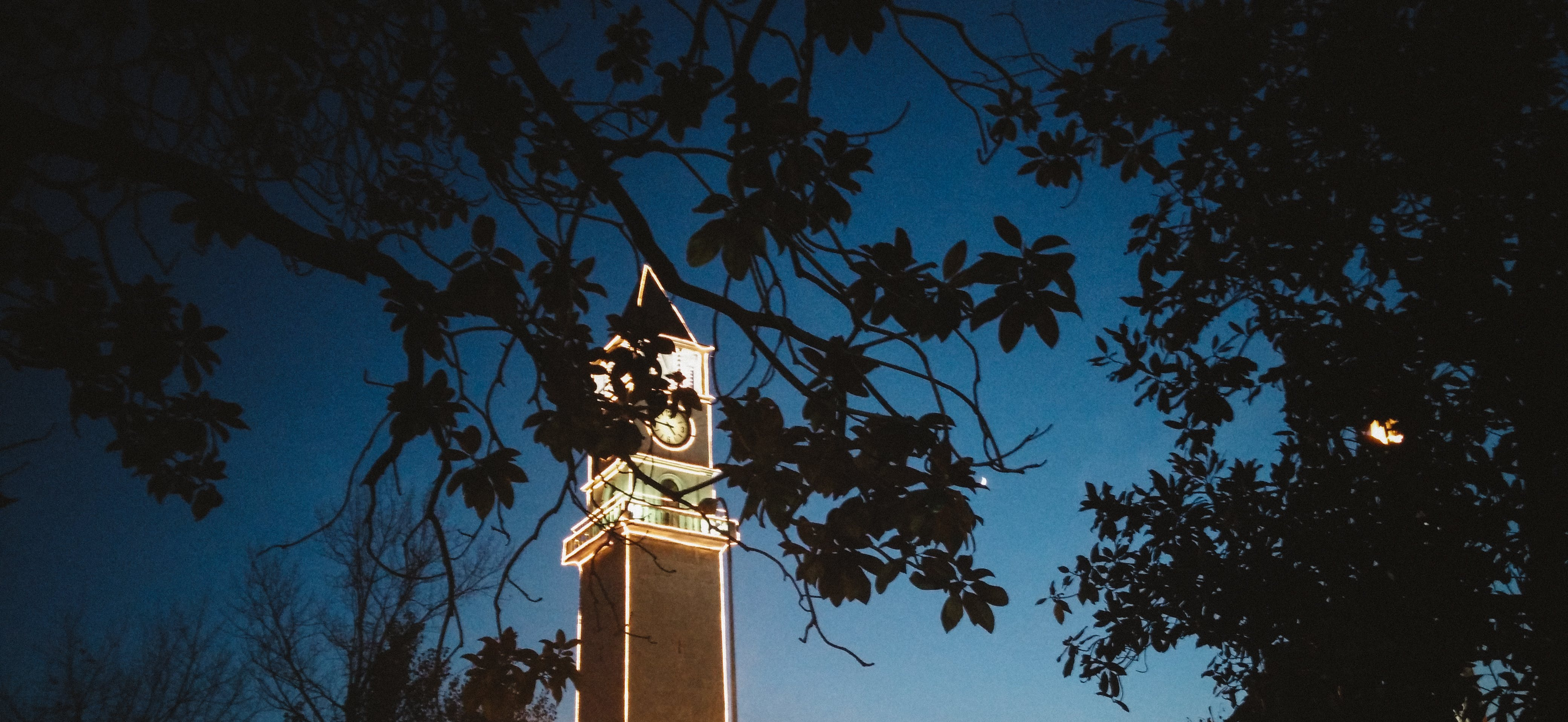 Free stock photo of blue sky, clock tower, green leaf, leafs