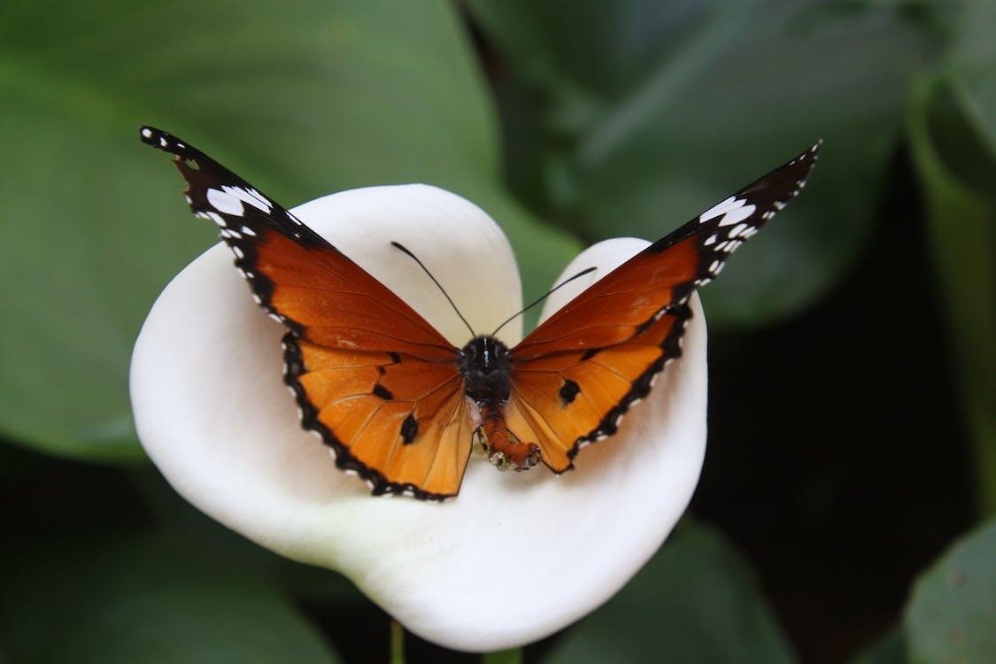 animal, ao ar livre, asas