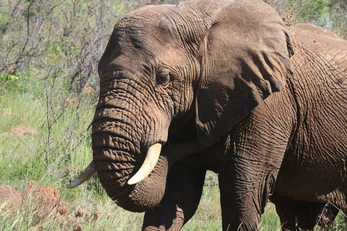 Photography of Brown Elephant