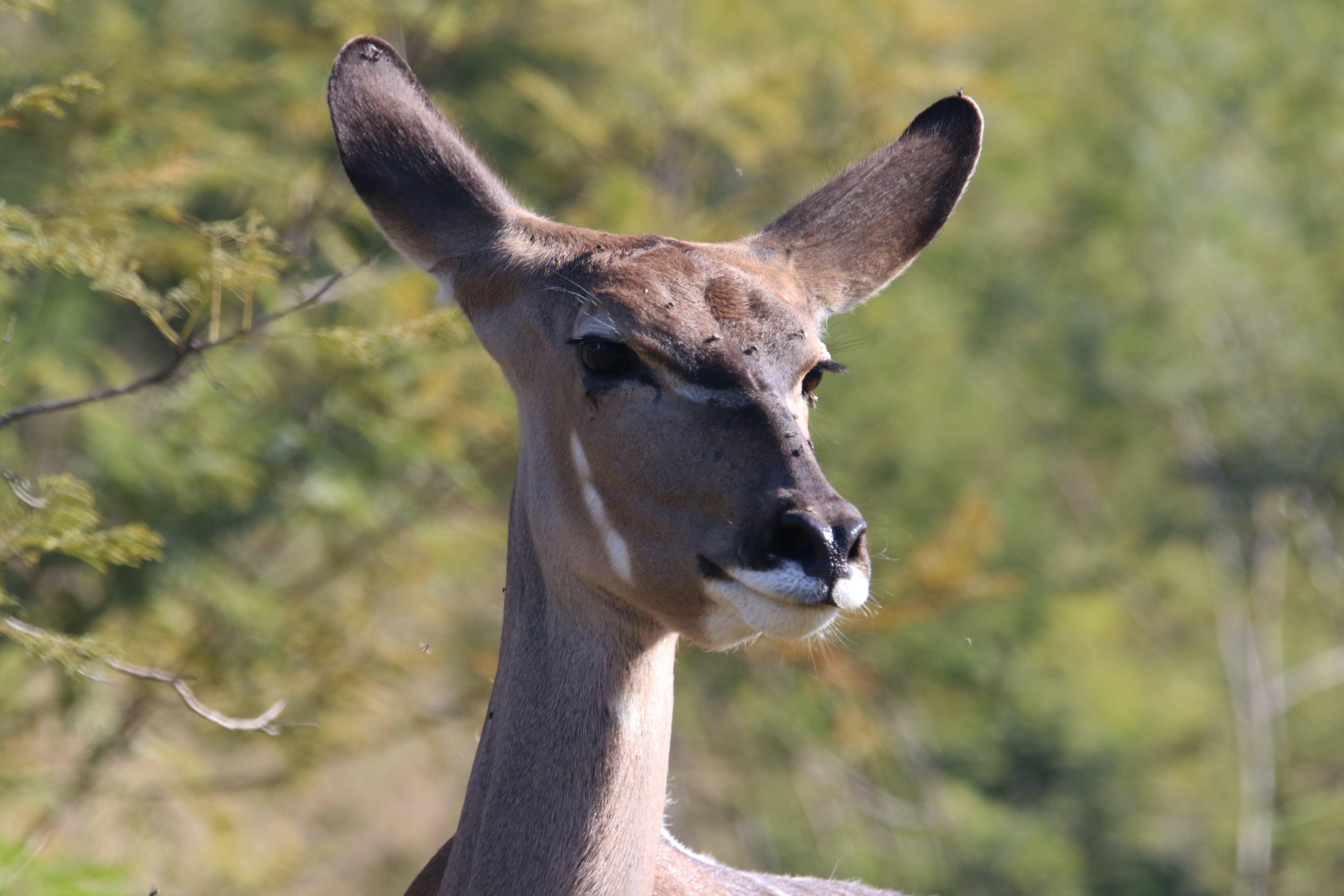 Closeup Photography of Brown Kangaroo