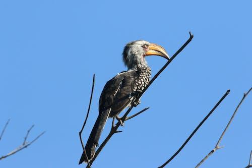 gün ışığı, kuş tüyü, Mavi gökyüzü, profil içeren Ücretsiz stok fotoğraf
