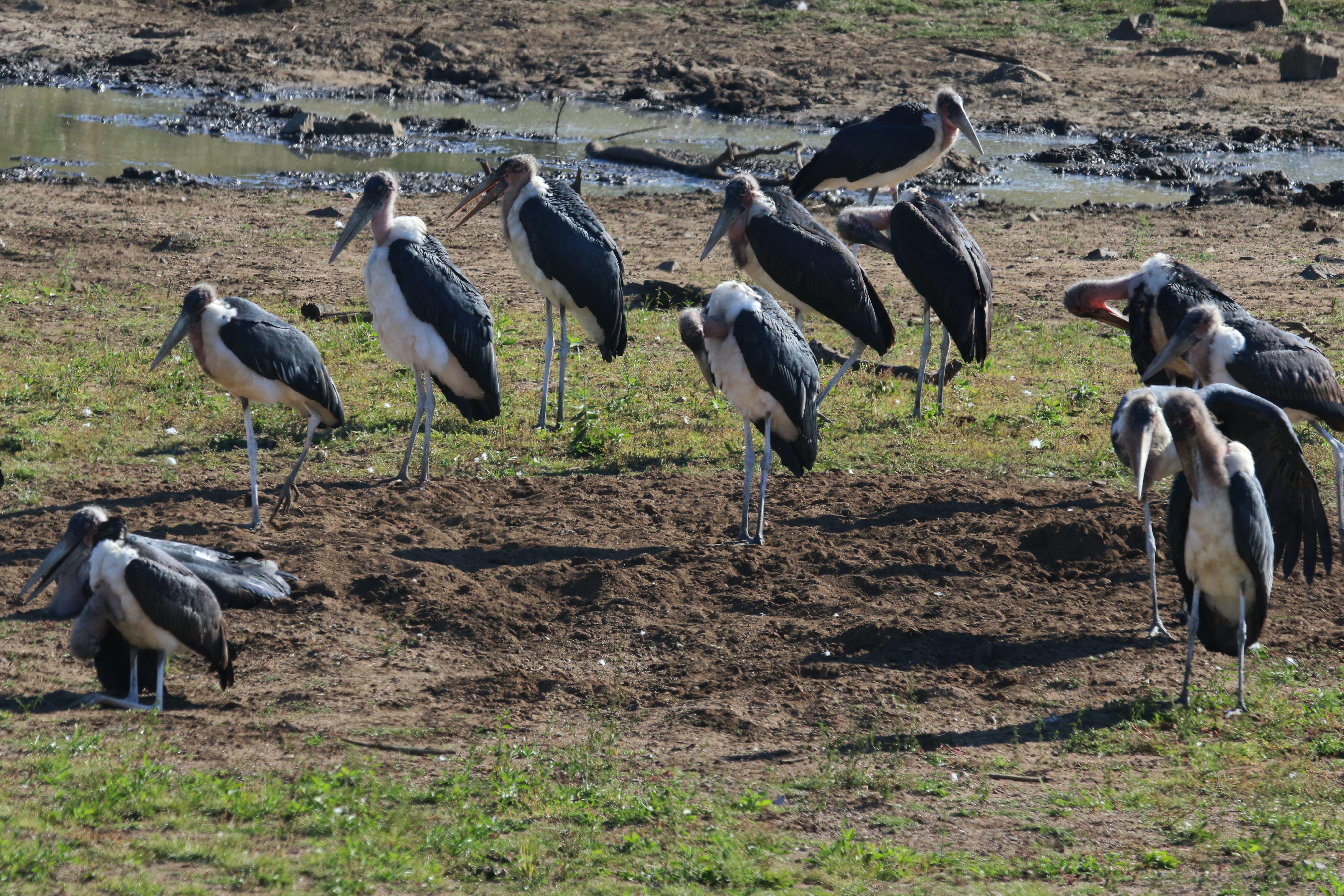 Free stock photo of animals, beaks, big birds, birds