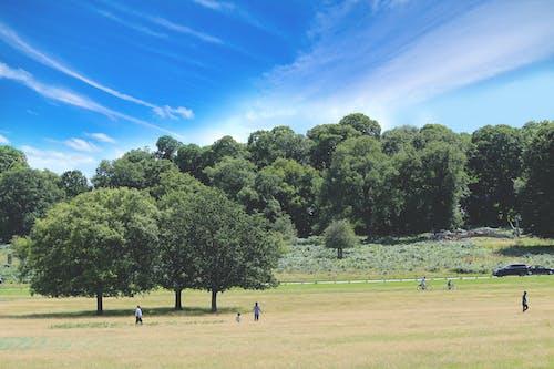 Kostenloses Stock Foto zu öffentlicher park, baum, bäume, familie