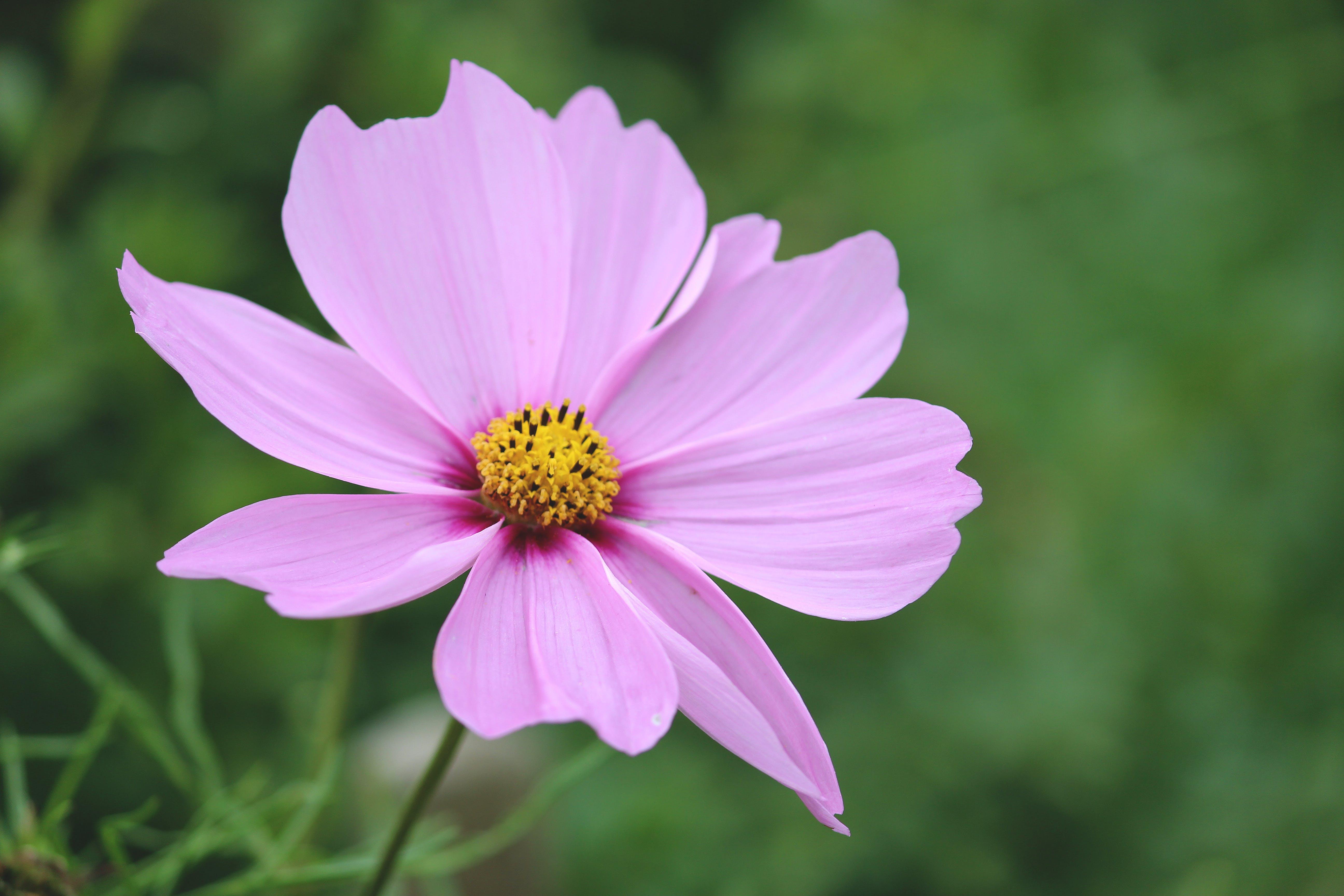 Free stock photo of beautiful flowers, beautiful view, Bradford, cupcake