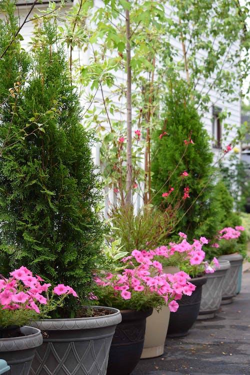 fiori in una pentola