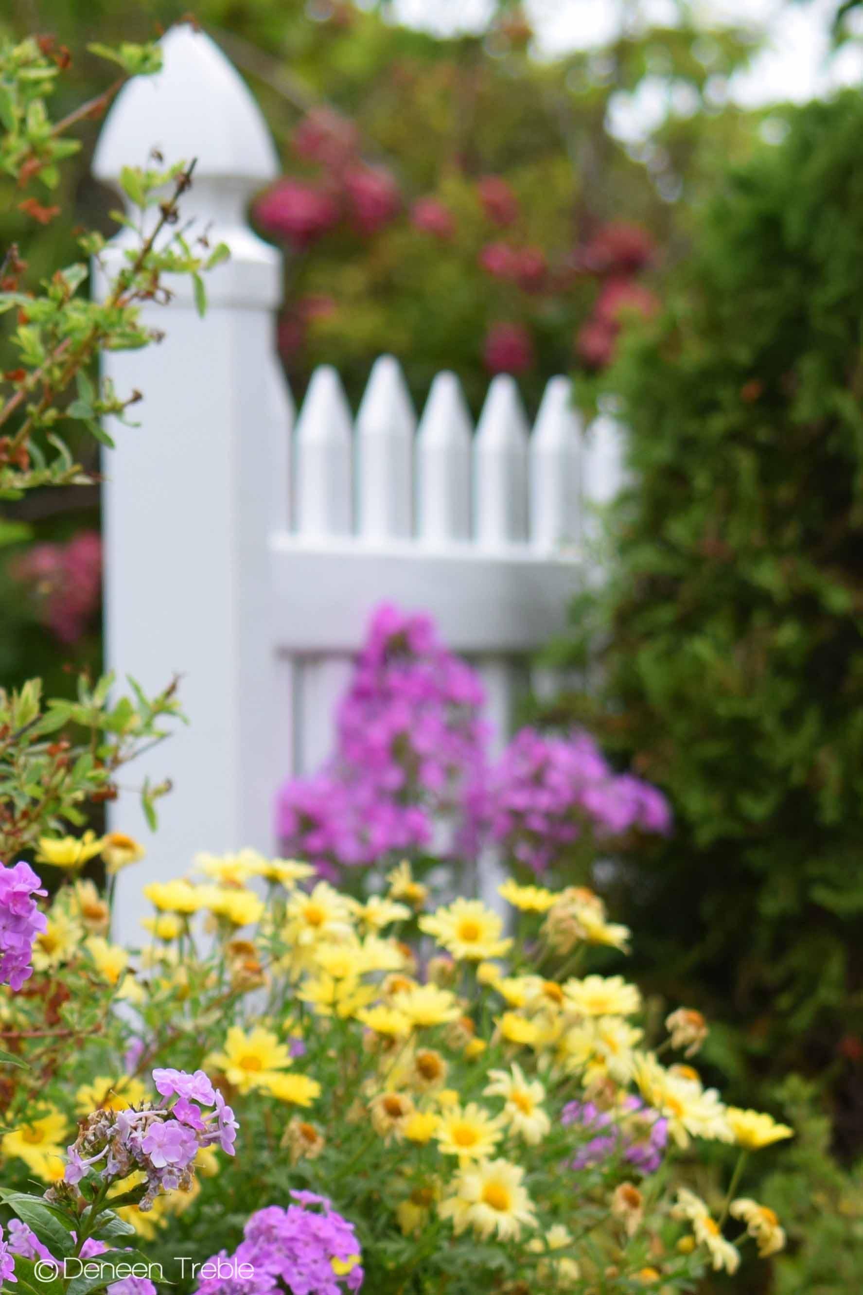 Gratis lagerfoto af blomsterbed
