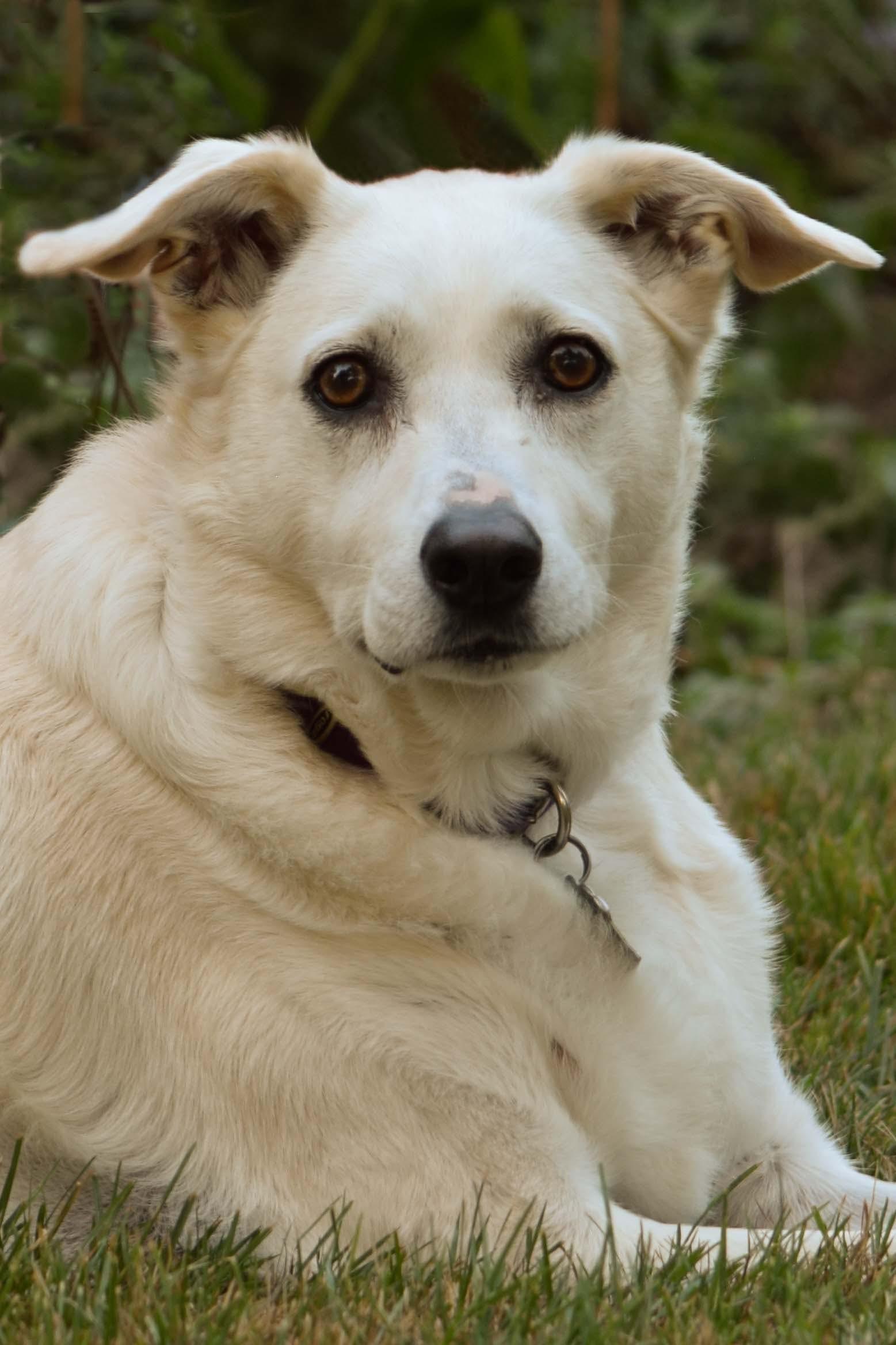 Gratis lagerfoto af hund