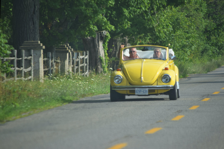 Free stock photo of vw beetle
