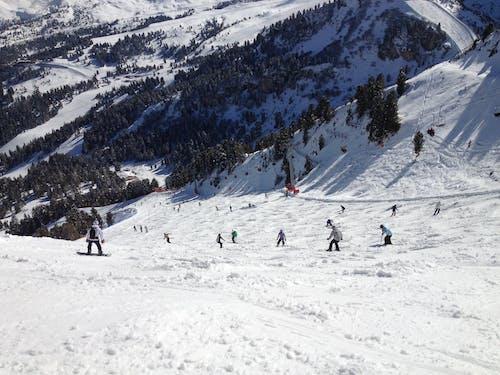 Immagine gratuita di alberi, attività, fare snowboard, freddo