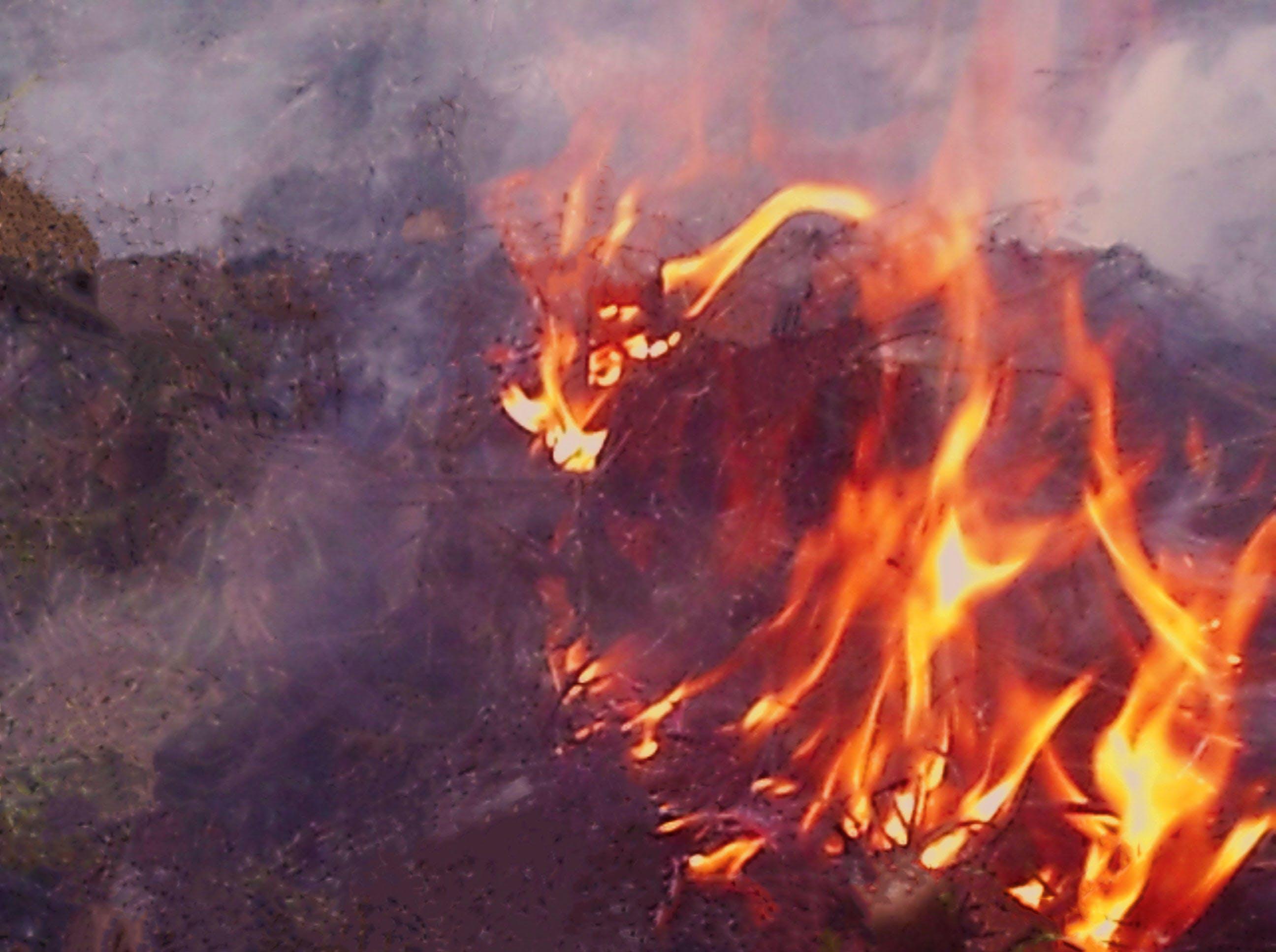 Free stock photo of fire, firearm, fireplace, forest fire