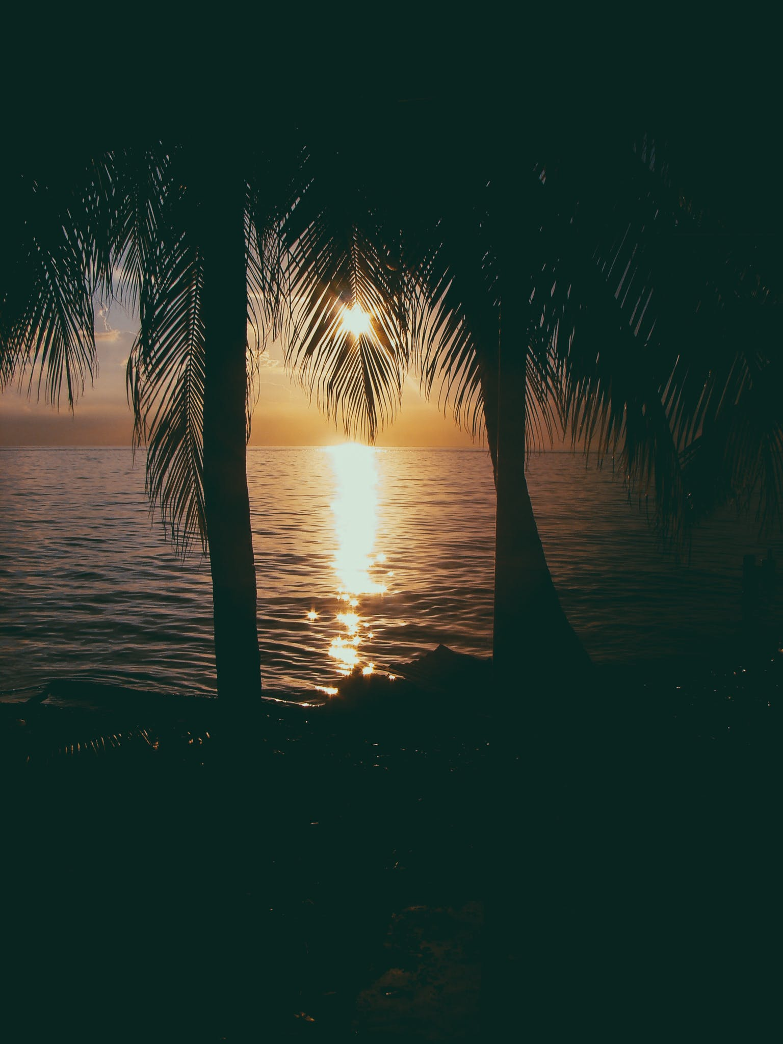Photo of Two Coconut Trees on Beach at Sunset