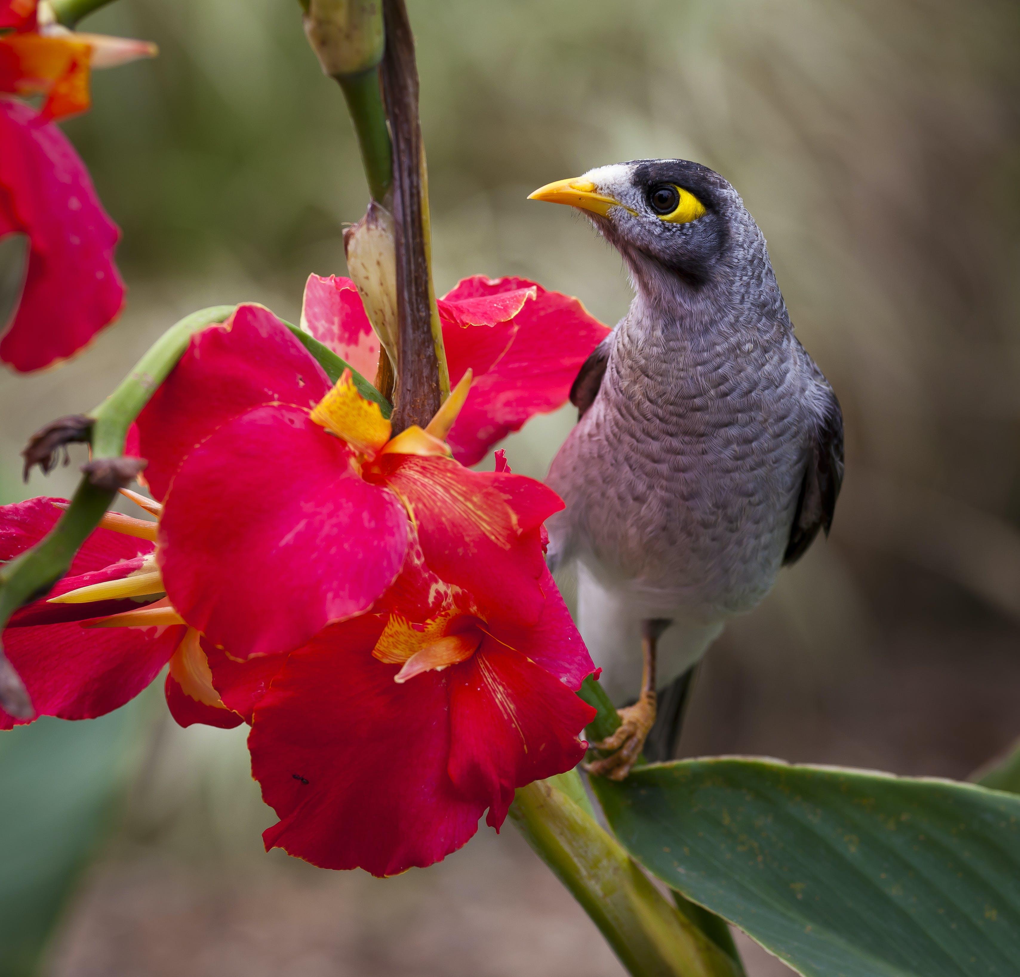Black Grey White Yellow Bird Near on Pink Petal Flower