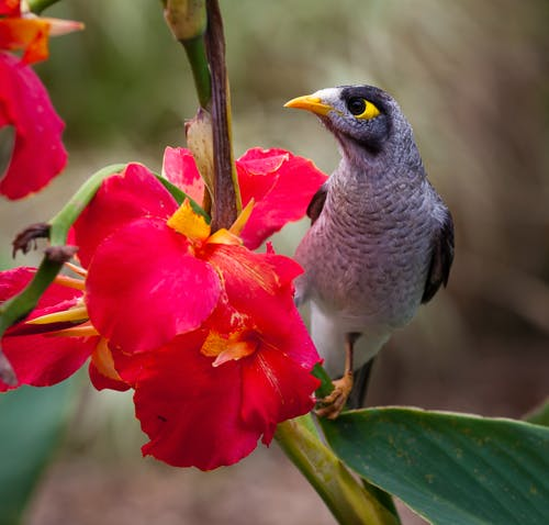 Black Grey White Yellow Bird Near on Pink Petal Flower