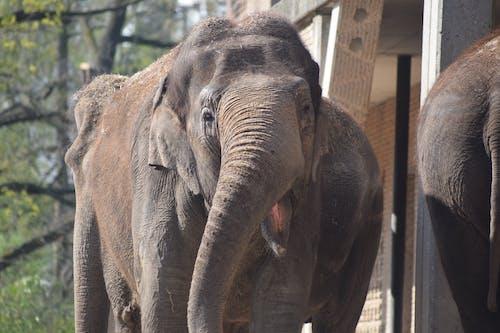 Close-up Photography of Elephant