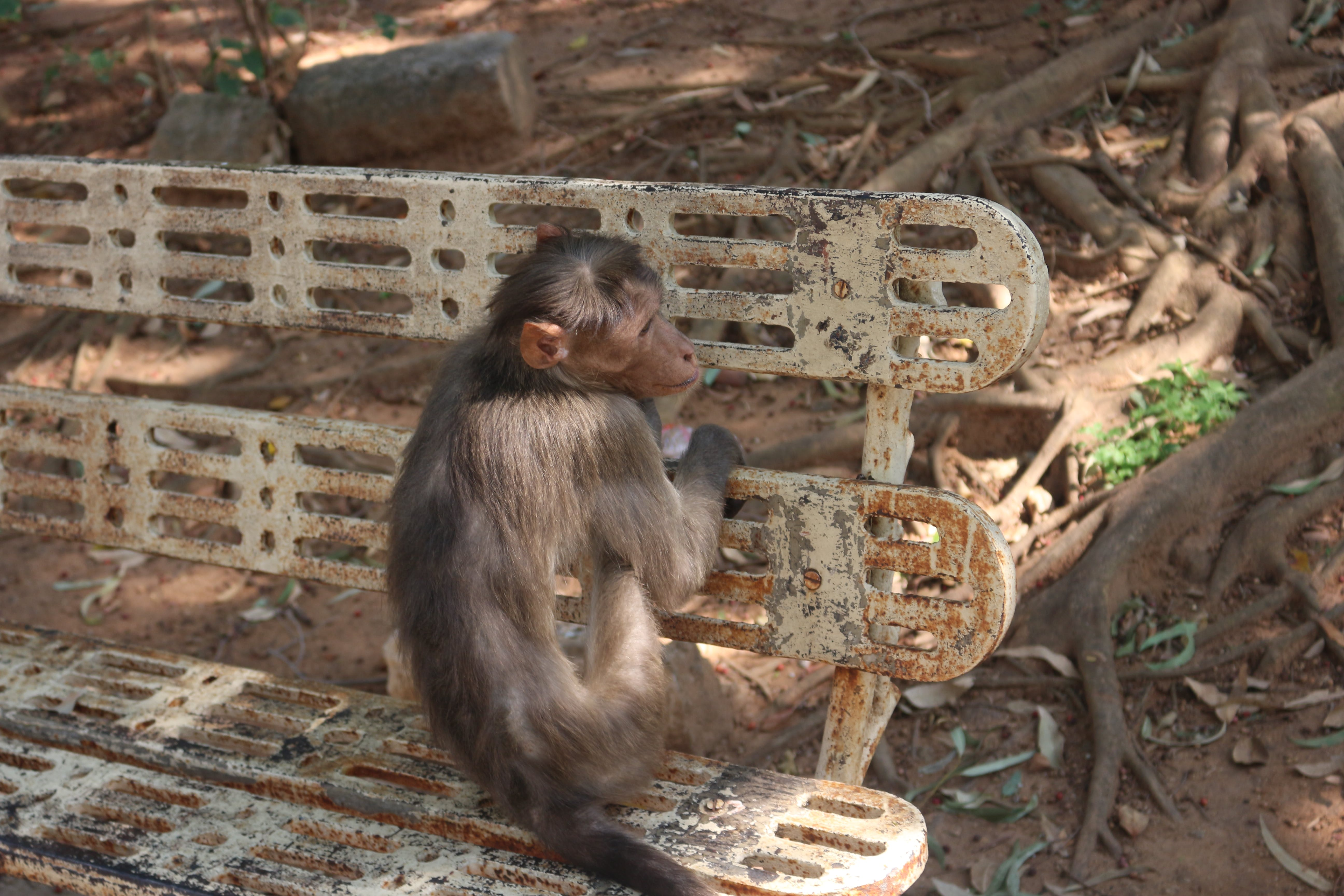 Monkey Trap on Outdoor Bench