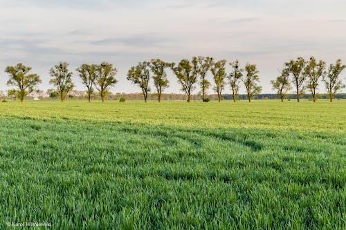 건초지, 경치, 국가, 나무의 무료 스톡 사진