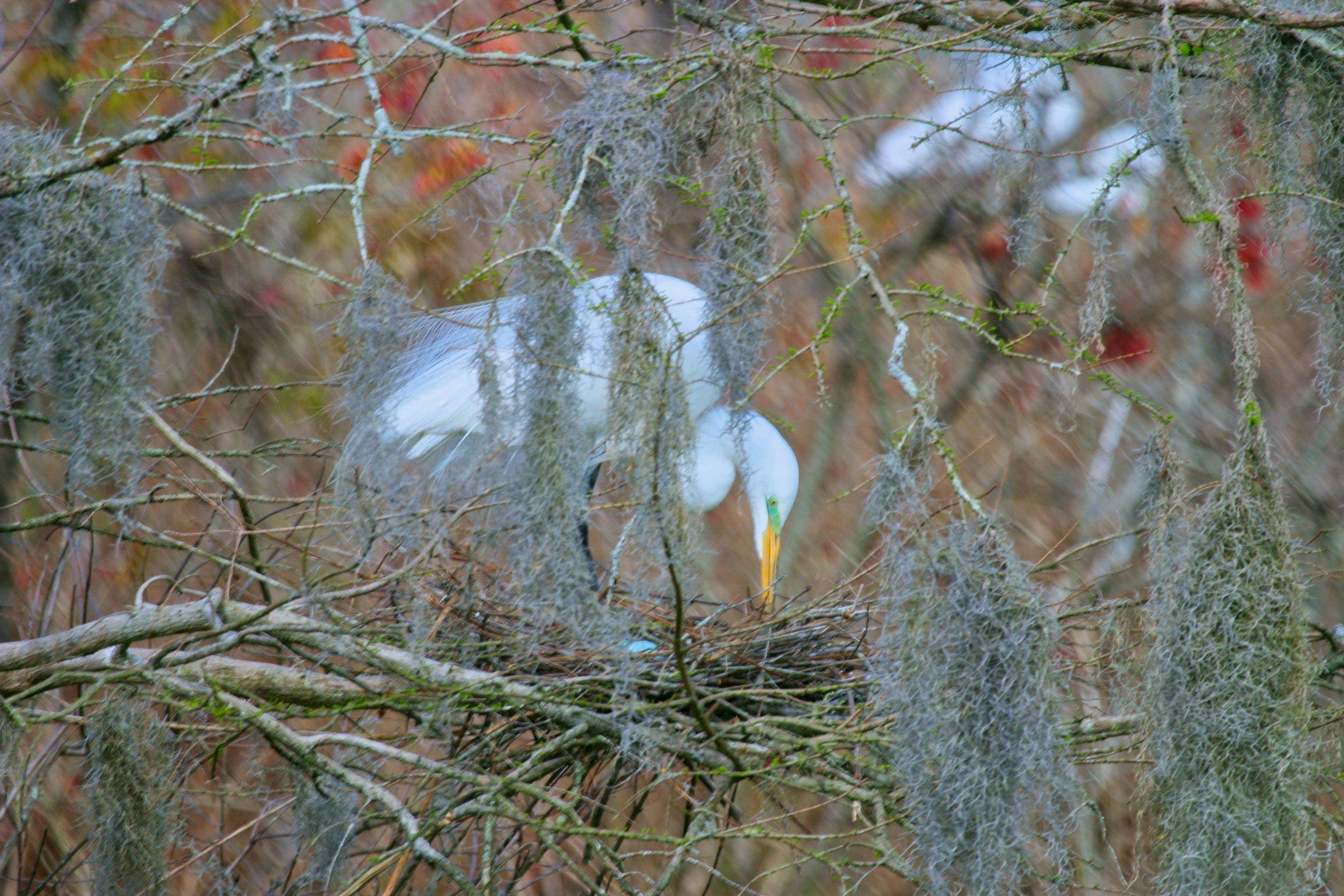 Focus Photo of White Bird on Nest