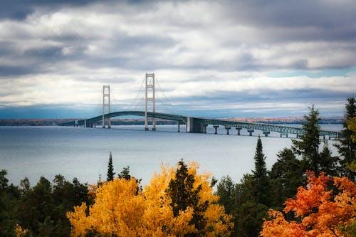 คลังภาพถ่ายฟรี ของ mackinac bridge, กลางวัน, ต้นไม้, ทะเล
